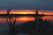 Picture of Sunrise on the Yukon River