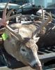 Archery Deer Taken Bowhunting in New York