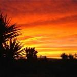 Mojave_Desert